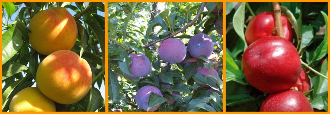 Slider-fruta